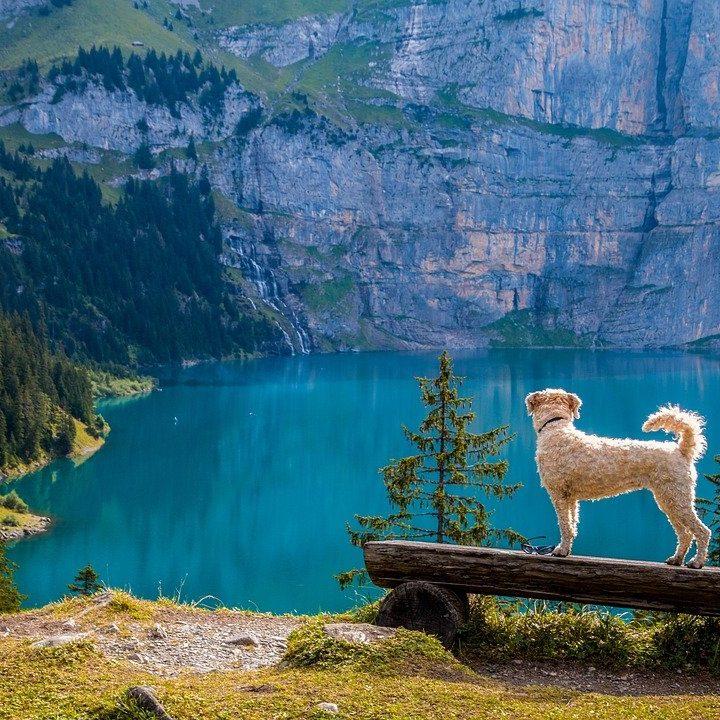 Kamizelka asekuracyjna dla psa – przydatna czy nie?