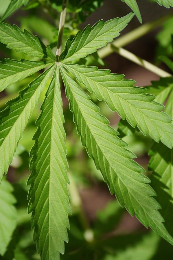 Sklepy oferujące sprzęt do wykorzystania uprawiania marihuany