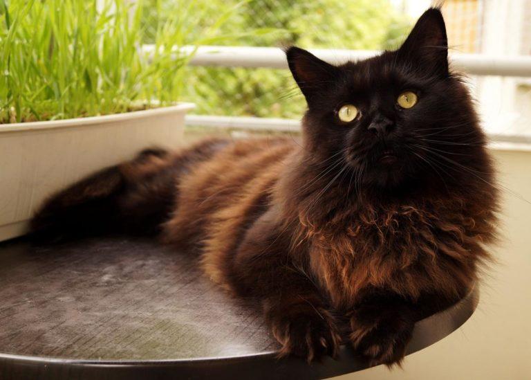 Skuteczne zabezpieczenie balkonu dla kota